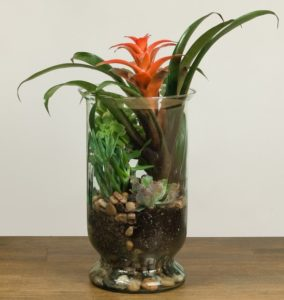 Send peace someone's way with this elegant, eye-pleasing arrangement of low-maintenance succulent plants and bromeliad